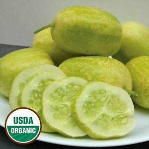10 Organic Crystal Apple cucumber seeds - Free ship - Buy 4 get 1 FREE !! Unique