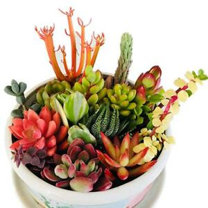 10 Assorted Succulents Live Succulent Cuttings For Wedding Decor Christmas Gifts