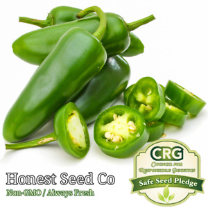 50 Large Jalapeno M Pepper Seeds Non GMO Fresh Garden Seeds from USA