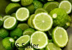 Citrus hystrix Thai kaffir lime 20 50 100 500 seeds