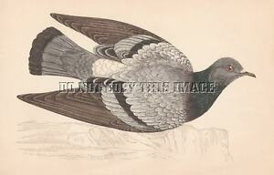 ANTIQUE SHOOTING REPRO PHOTOGRAPH PRINT FLYING PIGEON HUNTING $11.99