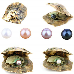 4PCS Saltwater Akoya Cultured Pearl Oyster with Round Pearl 6.5 7.5mm Inside or