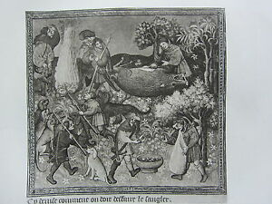 ANTIQUE HUNTING PRINT THE quot;UNDOINGquot; OF WILD BOAR PREPARING REWARD FOR HOUNDS