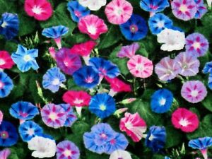 FAT QUARTER MORNING GLORY FLORAL QUILTING FABRIC LANDSCAPE MEDLEY FLOWERS FQ $3.95