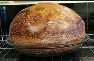 sourdough starter from ALASKA very active and sour original yeast
