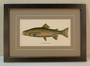 Antique 1897 Rainbow Trout PA State Fisheries Report book plate framed vintage