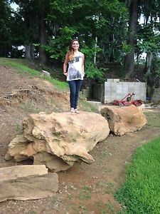 Petrified Wood Tree 48 ft + long altogether 2 12 - 5 ft diameter 80-100K Lbs