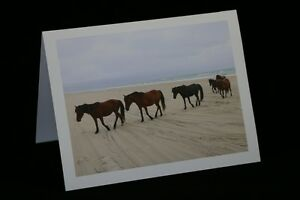 Photograph Note Cards Any Occasion Homemade Blank Cards Outer Banks Horses $7.50