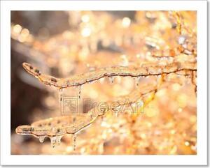 Branches Covered With Ice Art Print Home Decor Wall Art Poster C