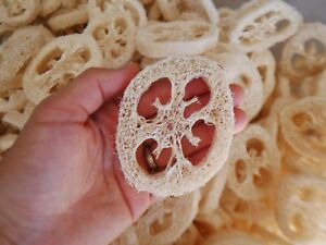 Wholesale Bulk Soft Natural Loofah 5 8quot; Slices 20 Pack USA SELLER FREE Shippin