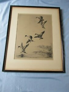 Listed Roland Clark Original Signed Etching Limited Edition Proof Pintails