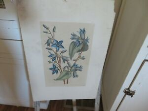 Vintage Antique Lithograph N. Robert 13 Engraving Beautiful Florals $49.99