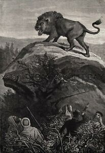 Lion Hunting in Eastern India Large 1860s Antique Engraving Print