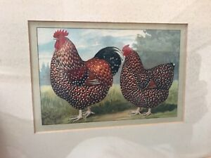 Antique set 3 1899 Chromolithograph Kramer Chickens Roosters Framed lithograph $49.00