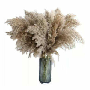 Natural Dried Pampas Grass Reed Flower Bunch Home Floral Decors 10Pcs $11.99