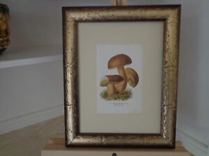 ANTIQUE 19TH CENTURY FRAMED PRINT OF MUSHROOMS BY EDMUND MICHAEL 1896 #1 OF 2 $39.00