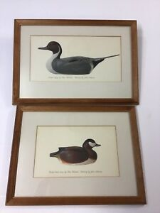 Two John Atherton Duck Paintings After Tom Schroeder Wood Carvings