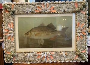 J. L. PETRIE PERCH FISH CHROMOLITHOGRAPH IN AN EXQUISITE HANDCRAFTED SHELL FRAME $395.00