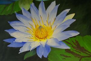 Water Lily Oil Painting Flower Painting quot;Water Lily Royaltyquot; 24quot; x 36quot; $400.00