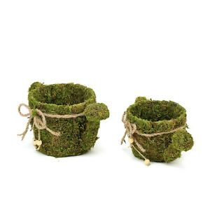 2 pcs Green Natural Moss Watering Can Planter Boxes Ribbons Party Decorations