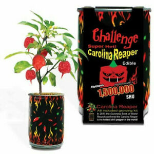 Challenge Super Hot Carolina Reaper Plant Grow Kit Garden Gift Chili Pepper Seed