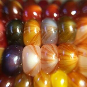 20 GLASS MARBLE - VERY RARE variant of Gem Corn organic seeds grown in Colorado