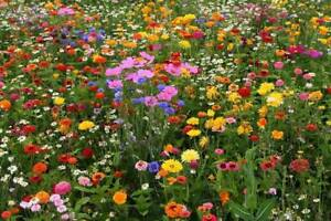 Deer Resistant Wildflower Seed Mix 13 Species Variety Sizes FREE SHIPPING $1.69