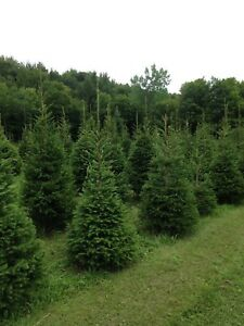 Trees and Shrubs for hedges screening and landscaping
