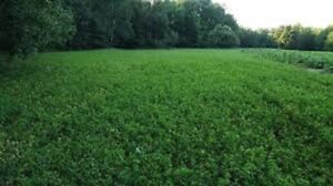 Premium DEER FOOD PLOT Seed Mix Alfalfa Ladino Clover Red Clover Chicory 90%Germ