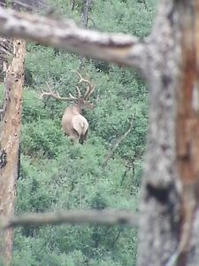 NEW MEXICO TROPHY BULL ELK HUNT Archery Rifle Muzzleloader You