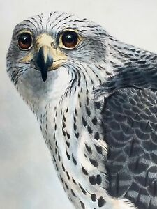 Icelandic Falcon by Joseph Wolf  1869  Hand Colored Lithograph - Framed