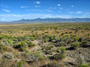 RARE 40 ACRE NEVADA RANCH  FINANCED  0%  SMALL DOWN PAYMENT! NO CREDIT CHECK!