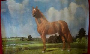 One Vintage Robert Wesley Amick Lithograph-Man O' War Legendary Horse 36
