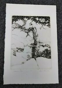 Vintage Signed Etching Schoodic Pine West Coast California Carmel?  ~8x10