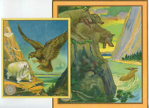 (2) 1900's Chromolithograph Printers Samples Wolves Chase Moose Bird of Prey