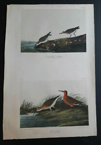 Audubon#x27;s Original Rare Bien Edition 336 333 Semipalmated and Curlew Sandpipers $1200.00