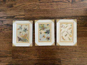 Antique INSECT VARIETIES original vintage color chromolithograph Bee Framed $50.00