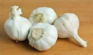 Garlic Bulbs Whole Bulbs Sold by Weight Ready for Planting or Preparing as a Gr $11.49