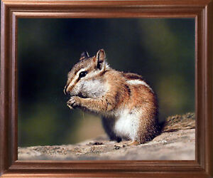 Chipmunk Eating Food Cute Animal Kids Room Decor Wall Art Decor Framed Picture