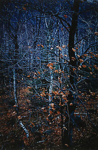 Paul CAPONIGRO: Redding Woods Connecticut 1969  Cibachrome  SIGNED!