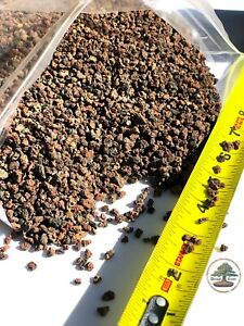 """2.5 lbs 1 8"""" 1 4"""" Horticultural Lava Rock for Bonsai Tree and CactusSoil $11.75"""