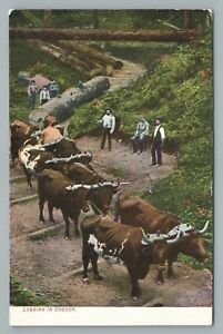 Logging Oxen—OREGON Rare LUMBER Antique Cows Occupation Timber 1910s $12.99