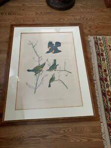 1860 Audubon Chromolith - Bien Edition (Red Winged Starling) 23.75 X 33.75