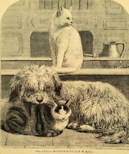 Antique VICTORIAN Wood Engraving Briard Dog Sheepdog and the Cats 1869 $6.50