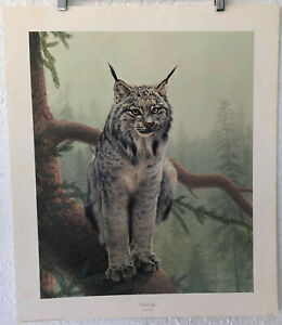 """Charles Fracé © Ltd. Ed. Lithograph """"Canada Lynx"""" signed 1977 release $124.98"""