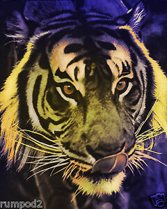 Tiger Poster PsychedelicTiger 16x20 in Wild Animals Africa Cat Poster $23.95