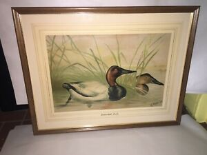 Antique Alexander Pope Jr Chromolithograph of A Canvasback Ducks Ca. 1890's 1900 $345.00