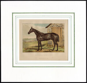 Antique Print-PORTRAIT-HUNTING HORSE-STONE BUILDING-1870