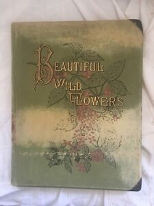 Beautiful Wild Flowers. Isaac Sprague . Color Chromolithograph Flowers $22.99