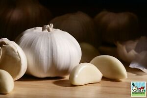 Garlic (Ajo) Sorted Bulbs! Great for eating or fall planting!